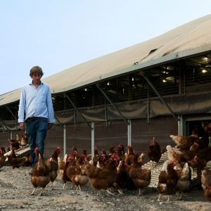 Fluffetts Farm With Hens